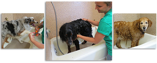 Dog grooming services
