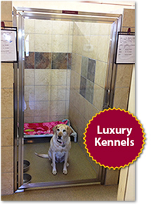 Kaos Kennels Luxury Suites