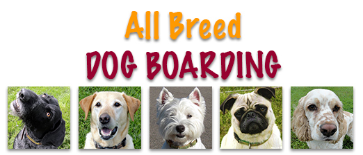 All Breed Dog Boarding